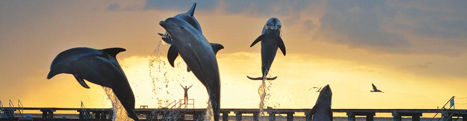 quienes-somos-fundacion-dolphin-discovery